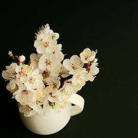 Sprigs of flowered apricot by Dani Solare