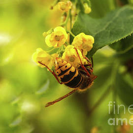 Spring blooming yellow bush bee on flower by Anna Matveeva