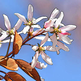 Spring Blossoms Stylized by Maria Keady