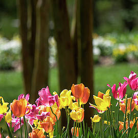 Spring Color by Mary Ann Artz