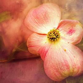 Spring Dogwood by Jim Love