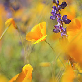 Wildflower Whispers by Sue Cullumber
