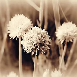 Spring Flowers #8 Monochromatic by Slawek Aniol