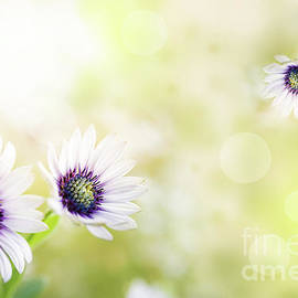 Spring fragrance by Flo Photography