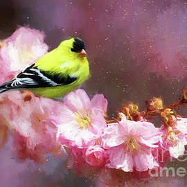 Spring Goldfinch by Tina LeCour