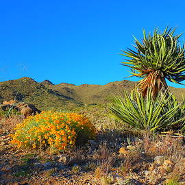 Spring In The Desert by James Welch