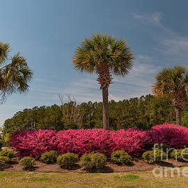 Spring In The Palmetto State  by Dale Powell