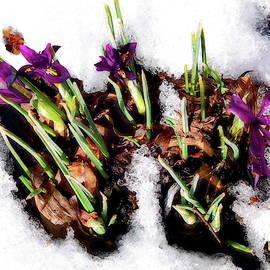 Spring in Winter by Lyuba Filatova