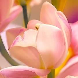 Spring Joy by Susan Rydberg