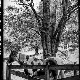 Spring Morning At The Fence Black And White Bordered by Debra and Dave Vanderlaan