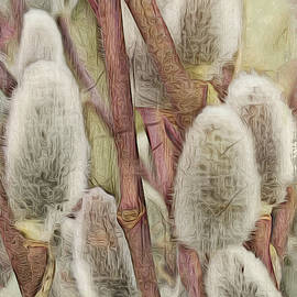 Spring Pussy Willow by Jill Love
