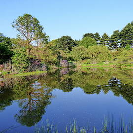 Spring Reflections at the Arnold Arboretum by Lyuba Filatova