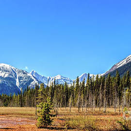 Spring View Of Canadian Rockies  by Robert Bales