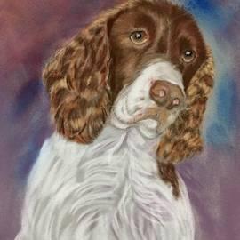 Springer Spaniel Art by Karen Harding