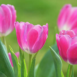 Spring's Arrival in the Garden by Lynn Bauer