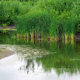 Springtime At The Lagoons by Sharon Talson