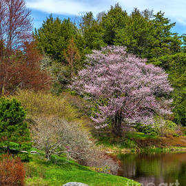 Springtime Beauty by Karin Pinkham