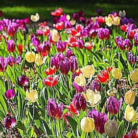 Springtime Happiness  by Cynthia Guinn
