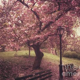 Springtime Poetry - The Cherries of Central Park by Miriam Danar