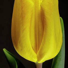 Springtime by Sandi Kroll