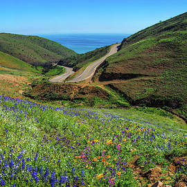 Springtime Wonders in Malibu - Superbloom 2019 by Lynn Bauer