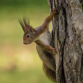 Toby Luxberg - Spuirrel