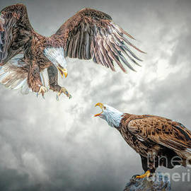 Squabbling Eagles by Brian Tarr