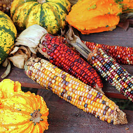 Squash And Indian Corn by Cynthia Guinn