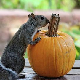 Trina Ansel - Squirrel and Pumpkin