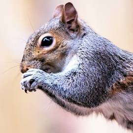 Squirrel Portrait by Mary Ann Artz