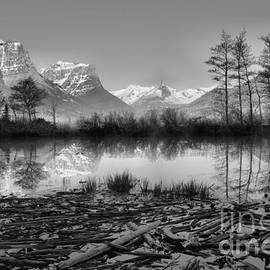St. Mary Driftwood Pond Reflections Black And White by Adam Jewell