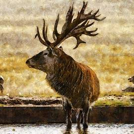 Stag in Water by Scott Carruthers