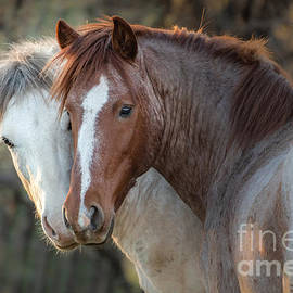 Stallions in Cahoots by Lisa Manifold