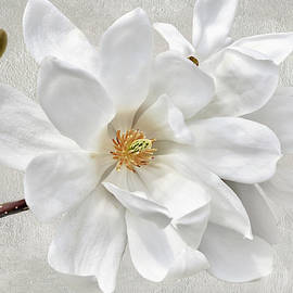 Star Magnolia Blossom by Isabela and Skender Cocoli