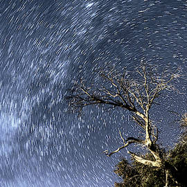 Star Trail Wonder by Chance Kafka