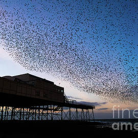 Starlings At Dusk Over Aberystwyth Pier by Keith Morris