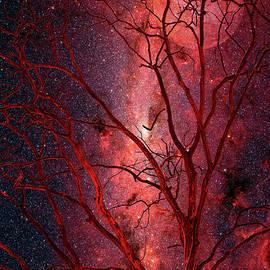 Stars and Mars in Winter by Dan Carmichael