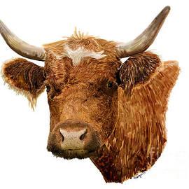Steer Portrait - Barnyard Bunch Collection by Kandyce Waltensperger