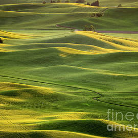 Steptoe Butte 2a by Tracy Knauer