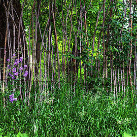Stick Fence Green Grass And Purple Flowers by James BO Insogna