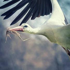 Toby Luxberg - Stork