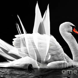 Strelitzia swan by Kira Bodensted