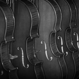 Strings Series 52 by David Morefield