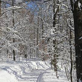 Strolling through the woods on a winter day by Ann Brown