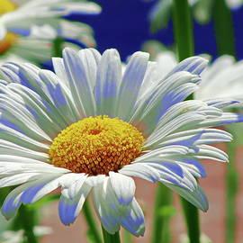 Stylized White Daisy Flower with Yellow Center by Lyuba Filatova