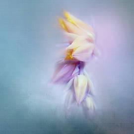 Succulent Flower by Terry Davis