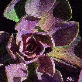 Succulent Shadows by Claudia O'Brien