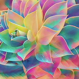 Succulents panels rainbow art by Geraldine Scull