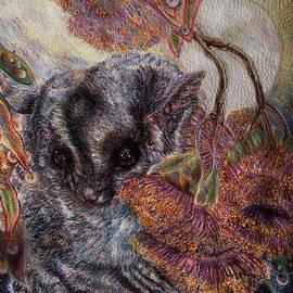Helen Duley - Sugar Glider Possum at Dawn