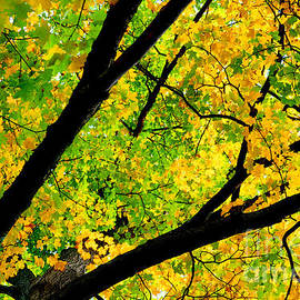 Tim Jensen - Change of Colors - Morton Arboretum, Lisle IL